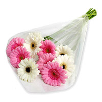 Send Rakhi with Flowers to India. Pink White Gerbera Bouquet 12 Flowers in India