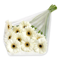 Rakhi in India with White Gerbera Bouquet 12 Flowers to India