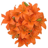 Send Rakhi with Flower in India. Orange Lily Flower Bouquet in India including 15 Flower Stems