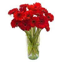 Online Flowers Delivery to Raichur. Deliver Red Gerbera in Vase 12 Flowers