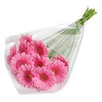 Rakhi to India with Deliver Pink Gerbera Bouquet 12 Flowers in India