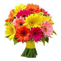 Special Rakhi Flowers for Sister is 24 Mixed Gerbera Flowers Bouquet