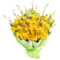 Online Flower Delivery in India with Bunch of Yellow Orchid 6 Flowers Stem on Rakhi