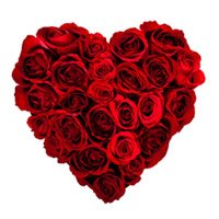 Valentine's Day Flower Delivery in Anand. Valentine Red Roses Heart Arrangement 100 Flowers